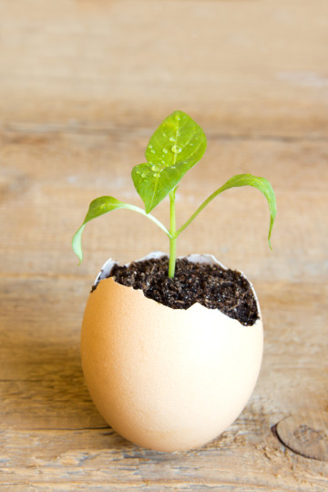 seedling in eggshell