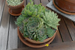 Thumbnail for - Plant a Tabletop Succulent Bowl