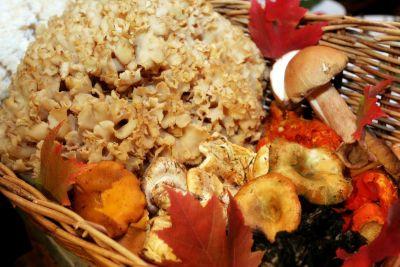Herbfarm   wild mushrooms z0cnms