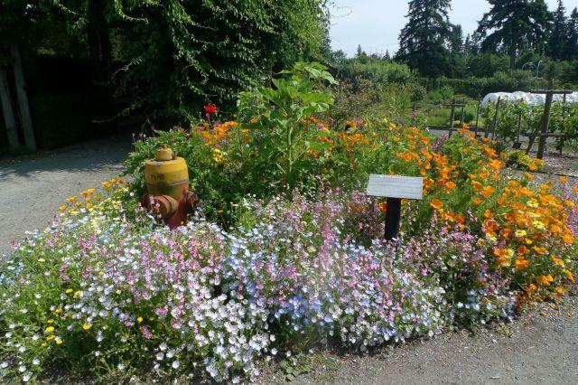 Ubcflowers2 nwbbuu