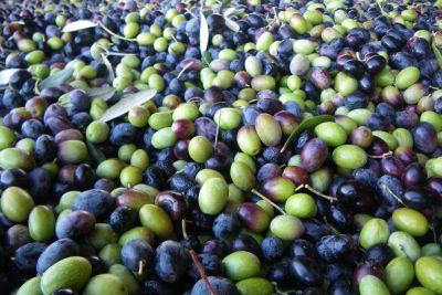 Olives 2 wtokvn