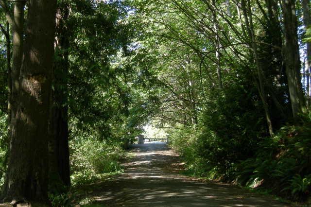 Seattle   schmitz park road 01 zx18dt