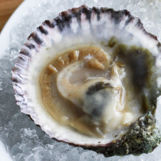 Thumbnail for - Slide Show: An Oyster Tour at The Parish