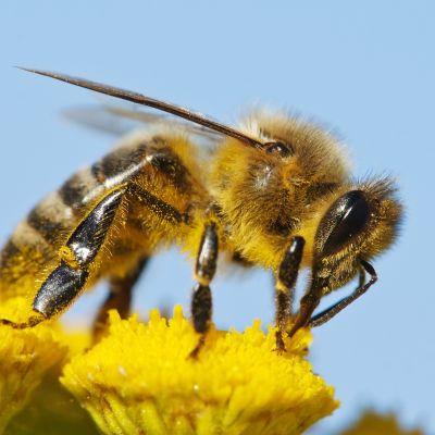 Bees iztd8j