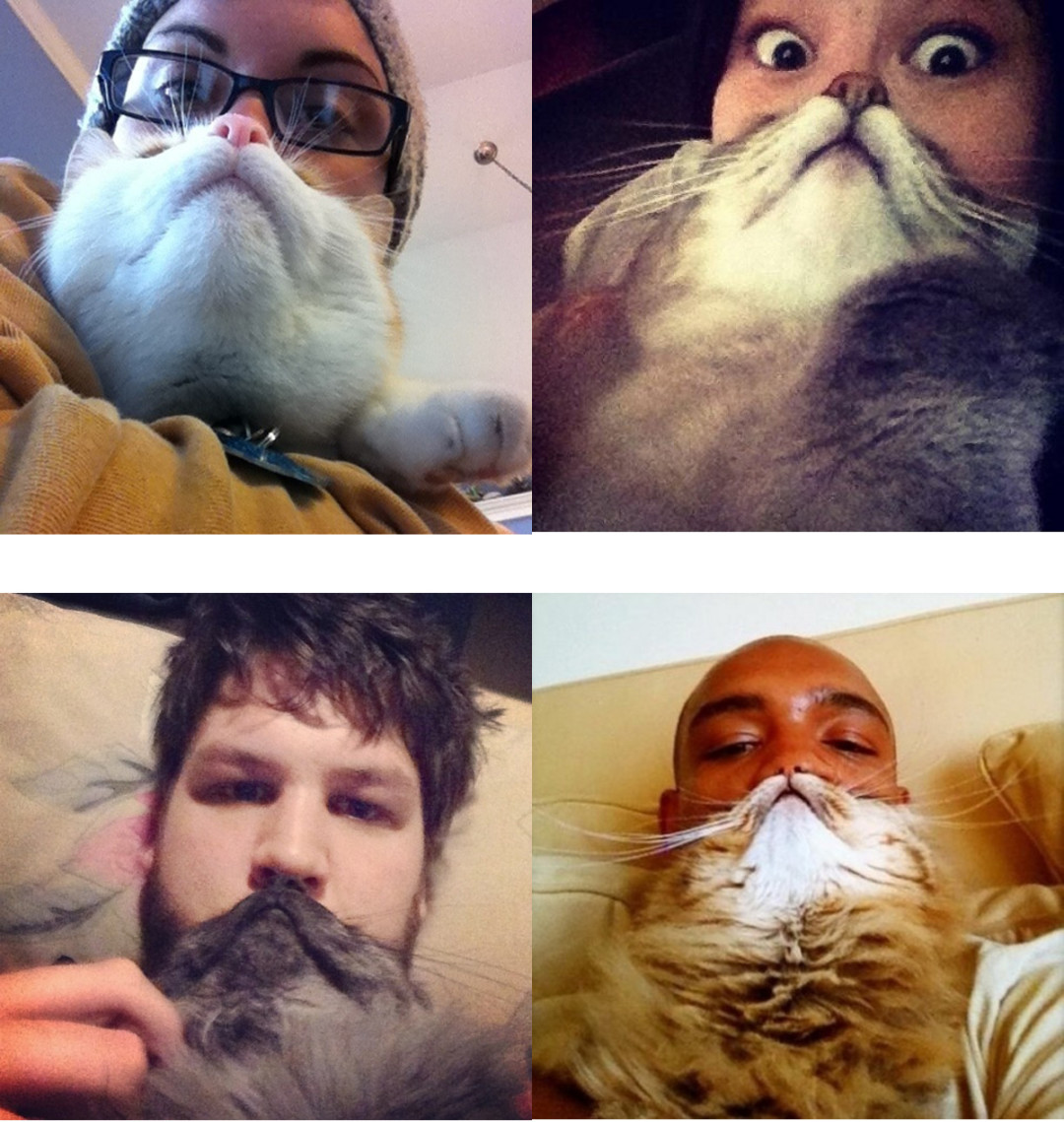 Cat beard imgur