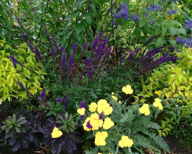 Flores perennes de color azul a púrpura | Como funcionan las cosas