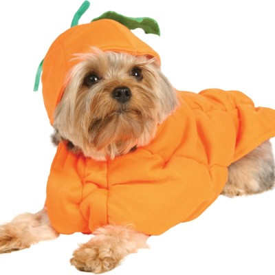 Pumpkin dog costume 34022 y2fgs7