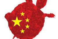 Hong kong turtle smuggling e5alwq