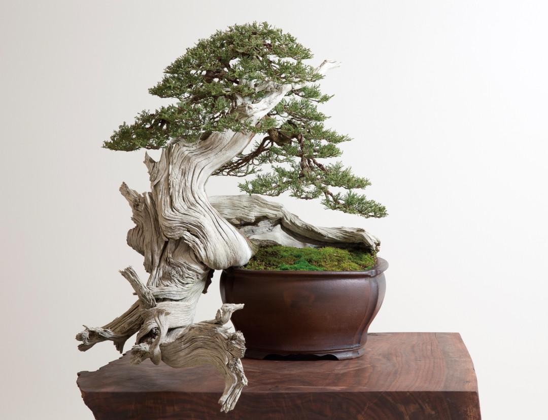0915 bonsai idtcde