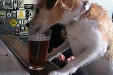 Beerdog u0am7t
