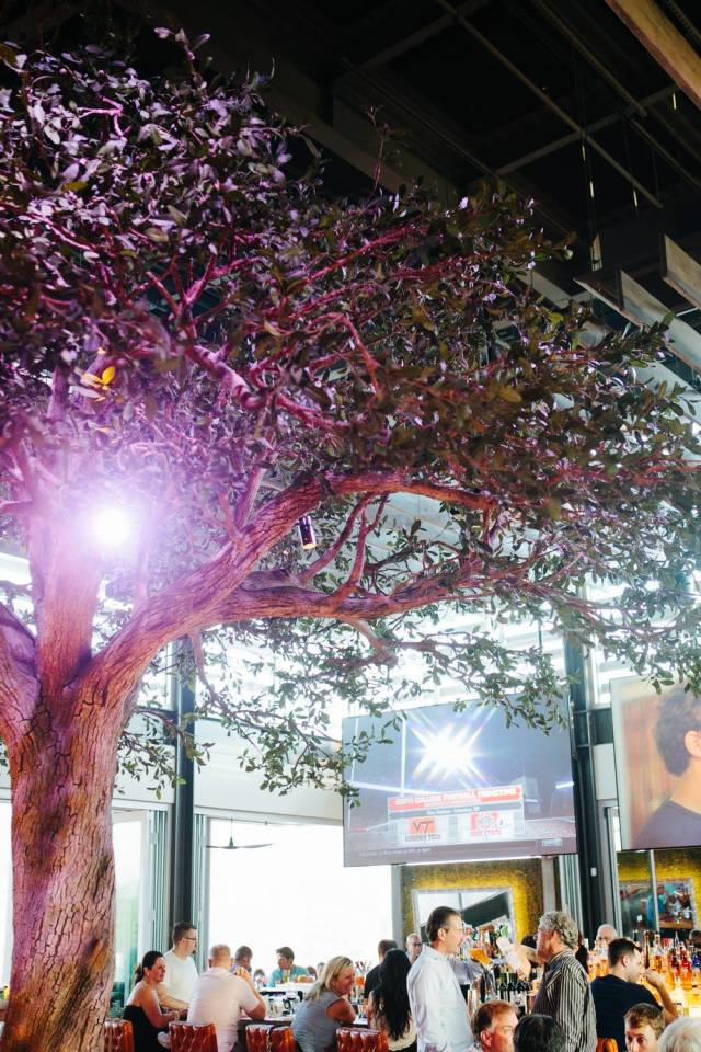 Tree sumomaya bgp2oy