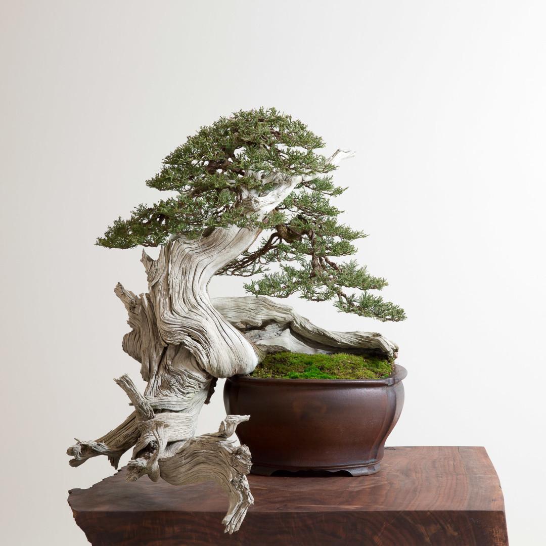 Tree 1 kgvpqh