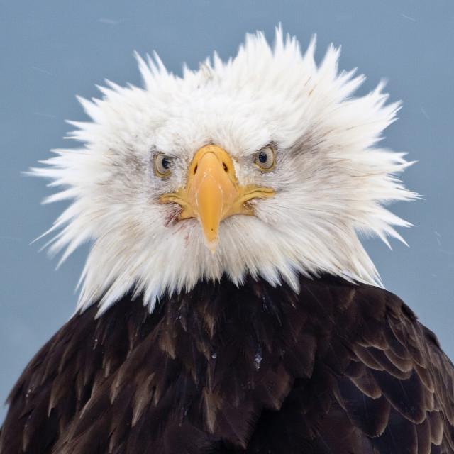 012413 eagle dx6ww4