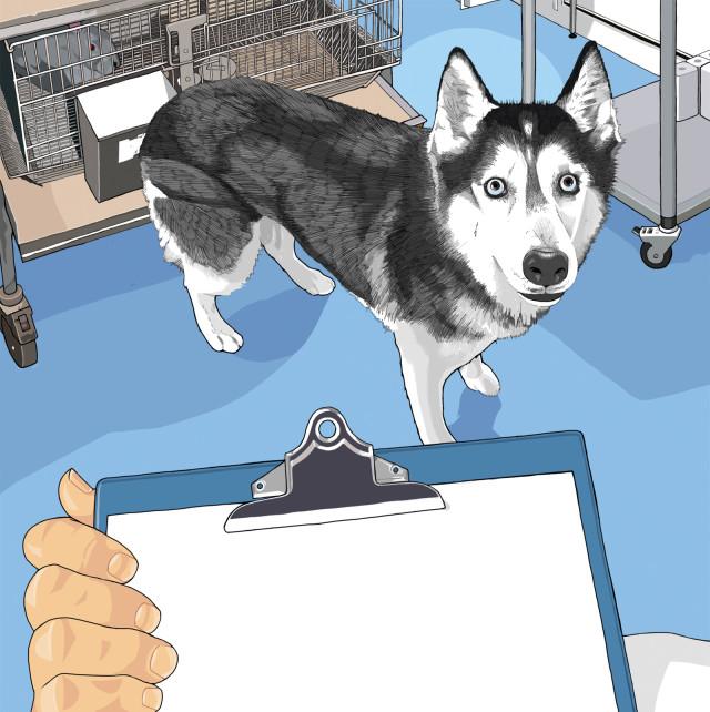 Animal testing dxkuhe