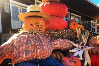 Our table pumpkin patch jjb5ze