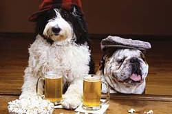 Dog bar fhjyhf