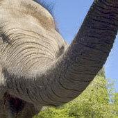 Pa zoo elephant 1 hzklsu