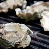 Oyster2 eywzia