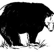 Bear m2gs4b