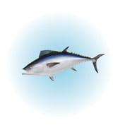Fish rfopvc