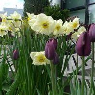 Spring tpq90c