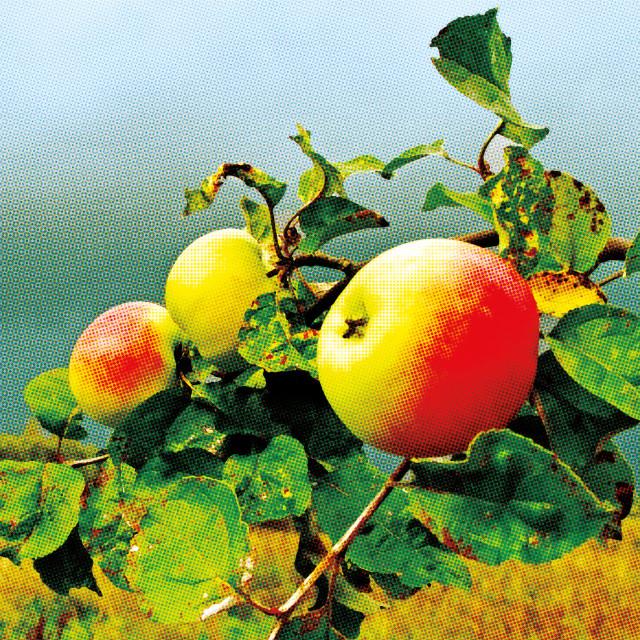 0815 apples fqcnqe