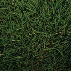 073 fiction grass at my feet t lnqi6a