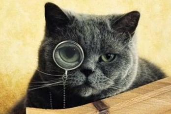 0912 cats utibxk