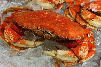 Dungeness crab vtwo7g