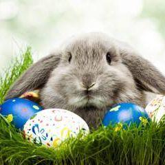 Bunny qv1xfl