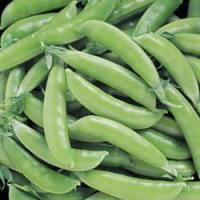 territorial seed super sugar snap pea