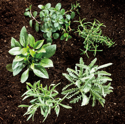 0715 herb garden wmsqne