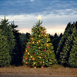 08 09 dec jan hand 111 xmas trees lights ytlayi