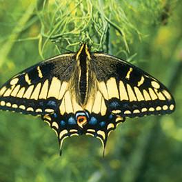 08 mayjune hand 127 butterfly dotkjl