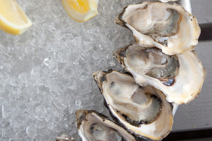 Oysters bkvove