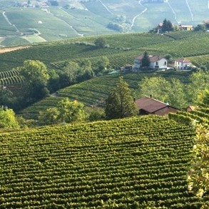 Vineyards piedmont italy iagfyi