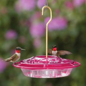Hummingbirds b2suqo