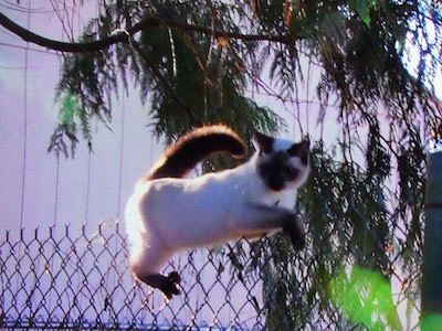 recapping treetop cat rescue seattle s new animal planet reality