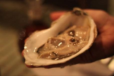 Oysters at luc nxvehs