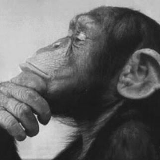 Thinker fimszi