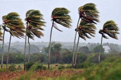 Palm tree rqgff1