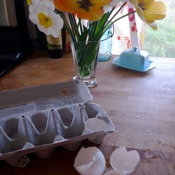Seeds in egg shells h6viwg