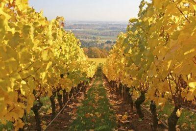 113 wine enthusiast willamette valley ofhfwi