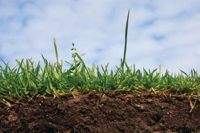 0708 dig great lawn h3xbg5