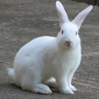 Bunnycrop gdnqbt