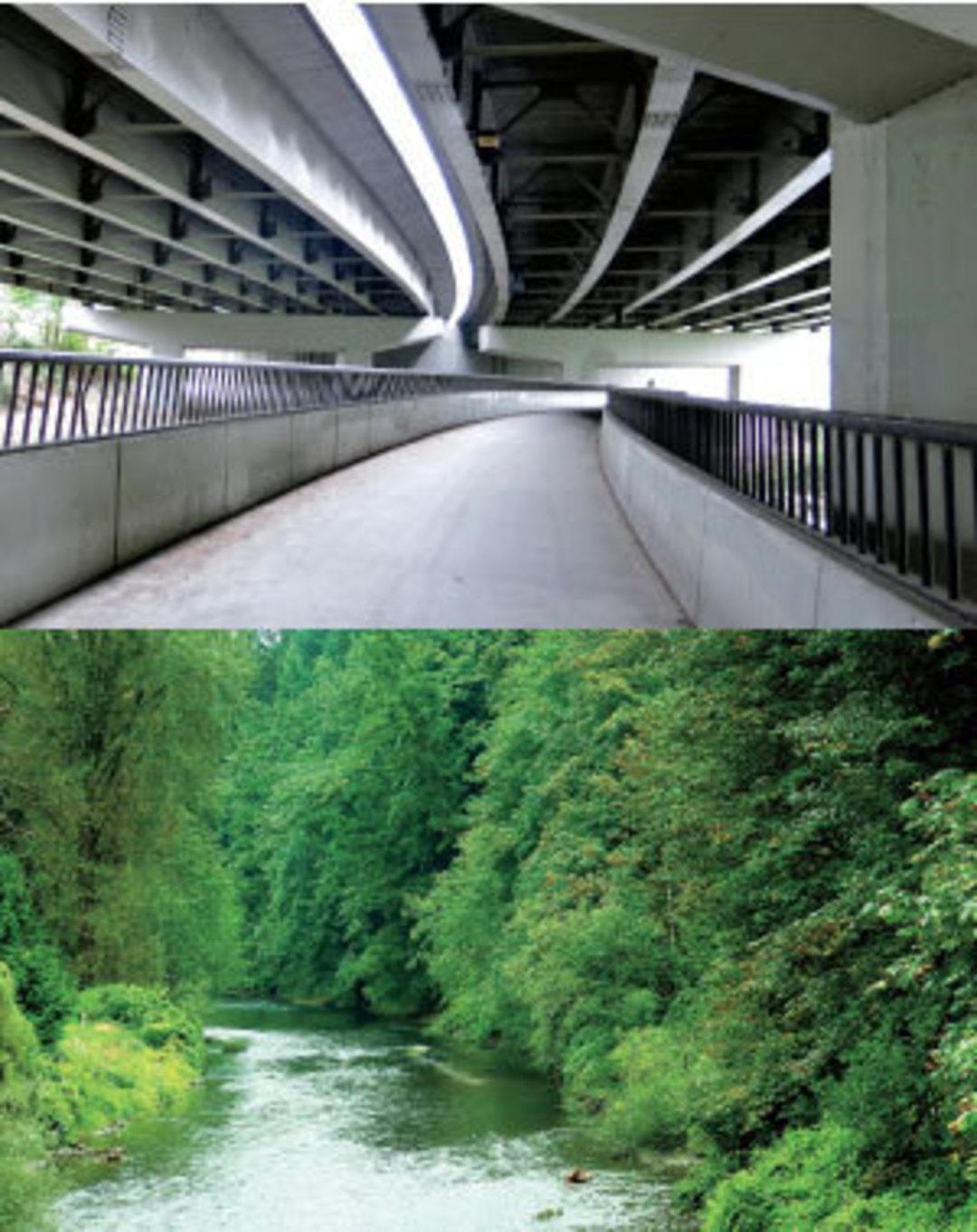 Seattle Trails: Cedar River Trail