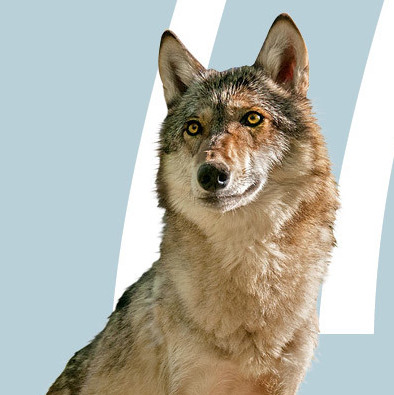 0615 wolves in oregon oduveq
