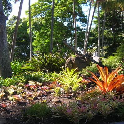 Bromeliad area neminb