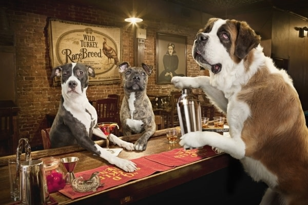 One eyeland dogs drinking by dale may 30366 p42beu