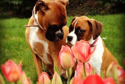 Kayla and lily 2012 xnhxac